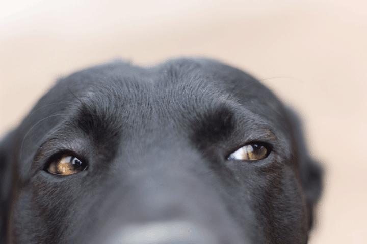 Daniel Petty Vansage Campervan Life with Dogs