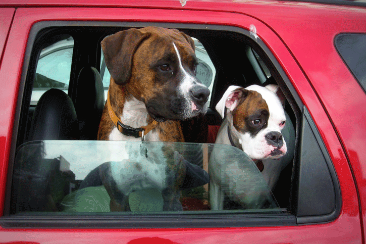 Wendy Berry Vansage Campervan Life with Dogs