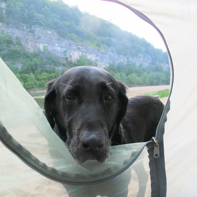 Oakley Originals Vansage Campervan Life with Dogs